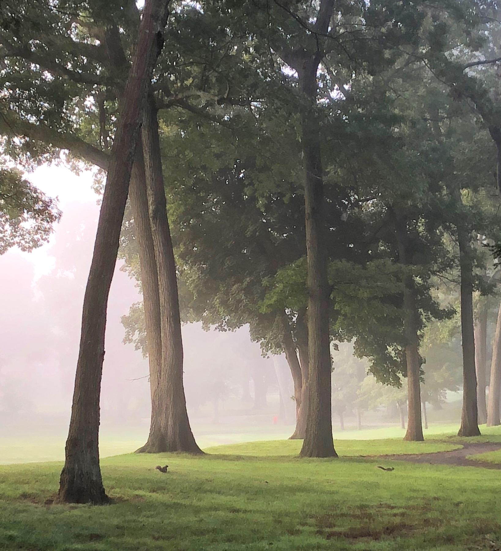 carol_wontkowski_landscapeseascape_stillness2_3.jpg