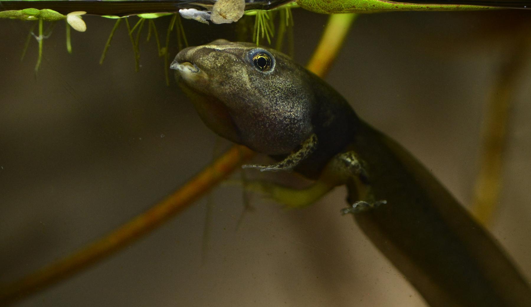 Karen_Burgess_Becoming a frog_2.jpg