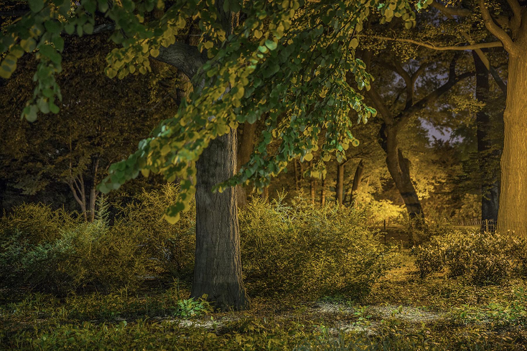 Sue_Bailey_Night Trees_Into the Breeze_5.jpg