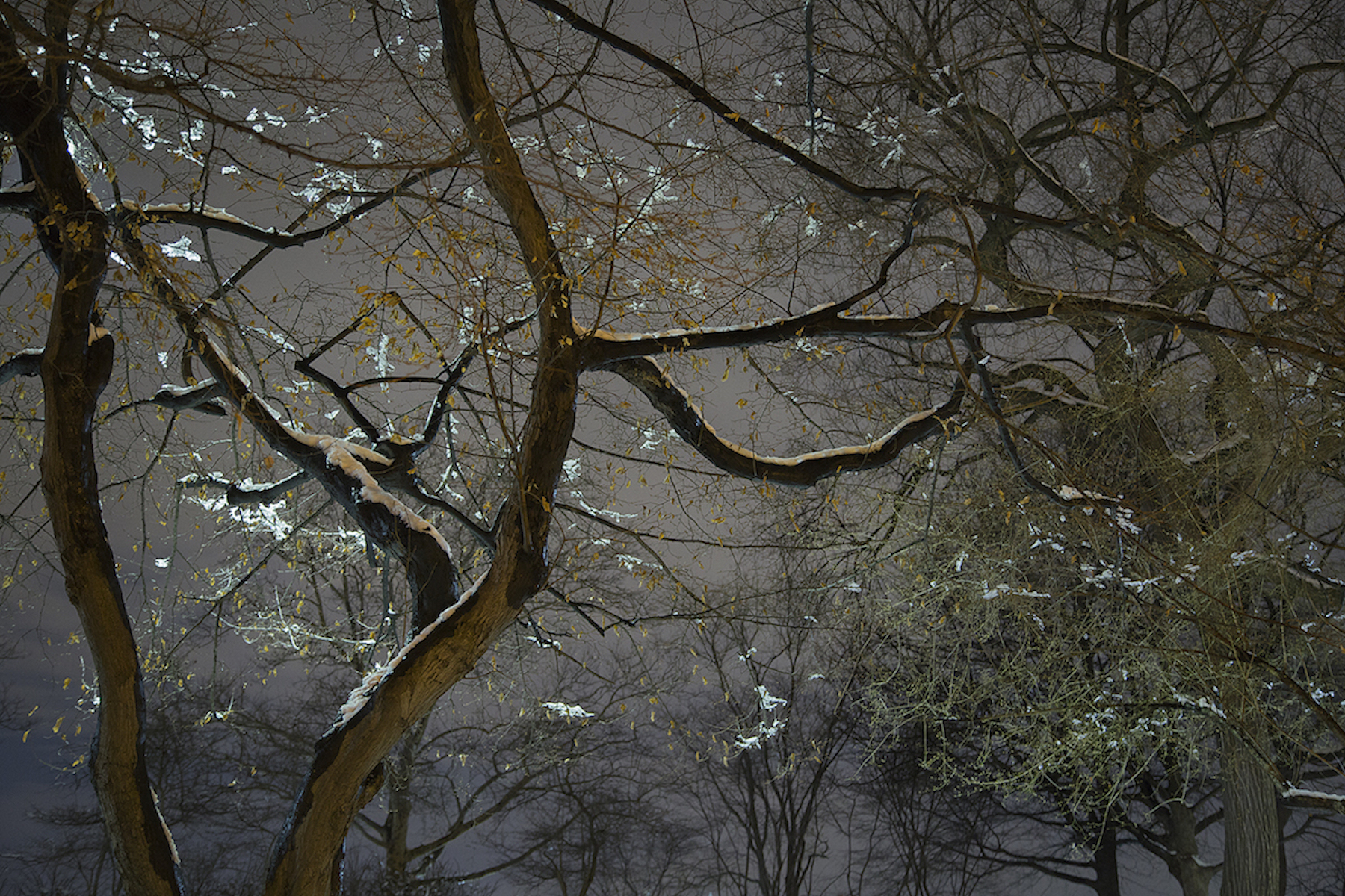 Sue_Bailey_Night Trees_Japanese Snow_4.jpg