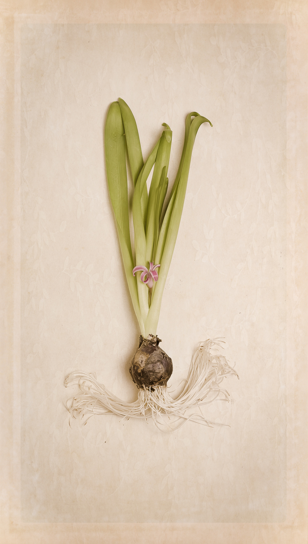 Annette_Knapstein_Botanical II.jpg