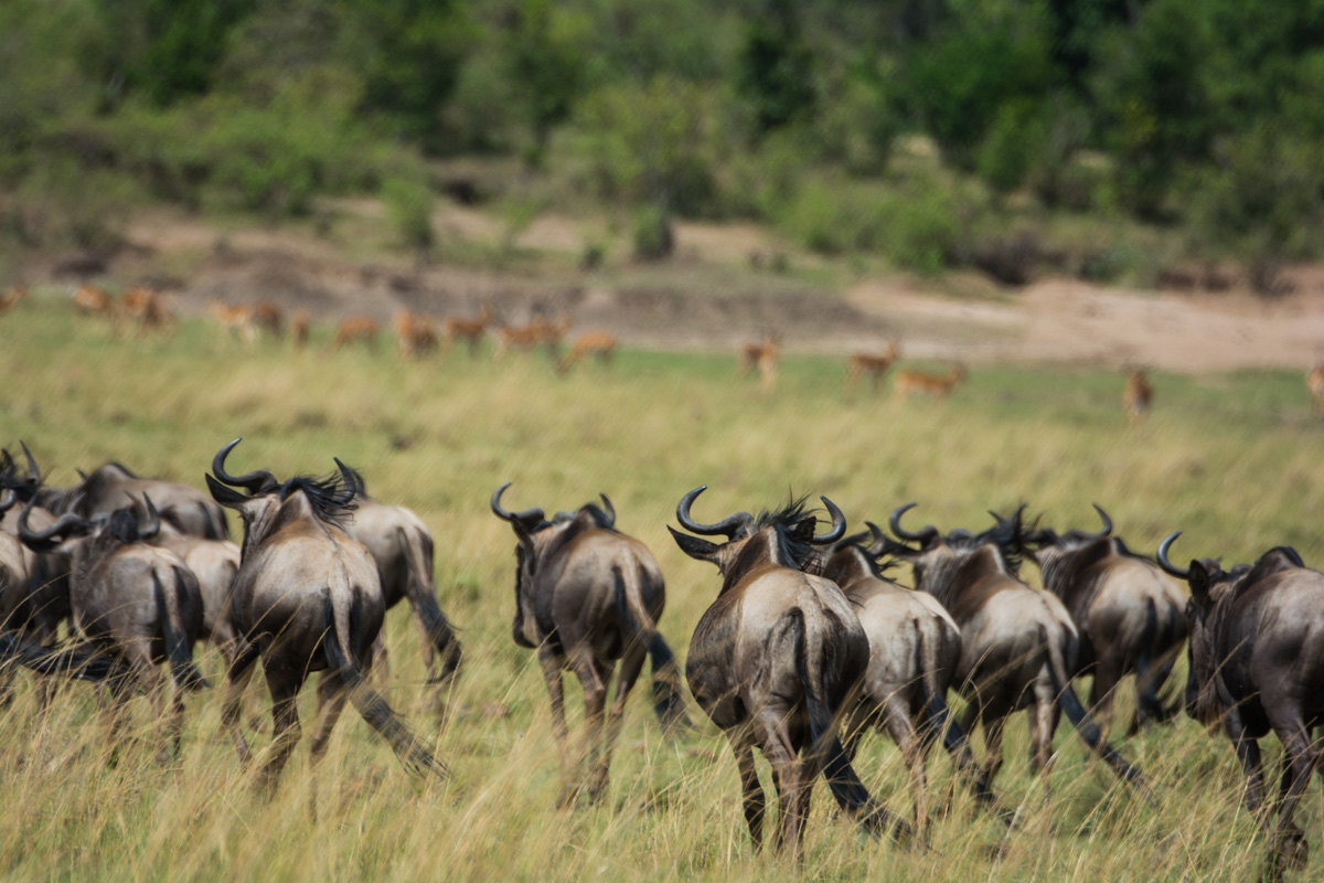 Jane_Walker_On Safari1.jpg