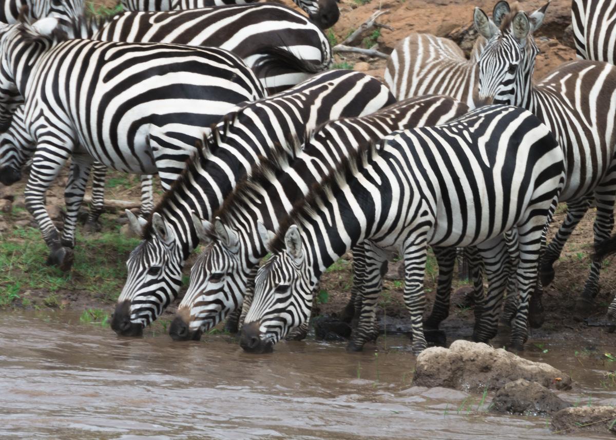 Jane_Walker_On Safari2.jpg
