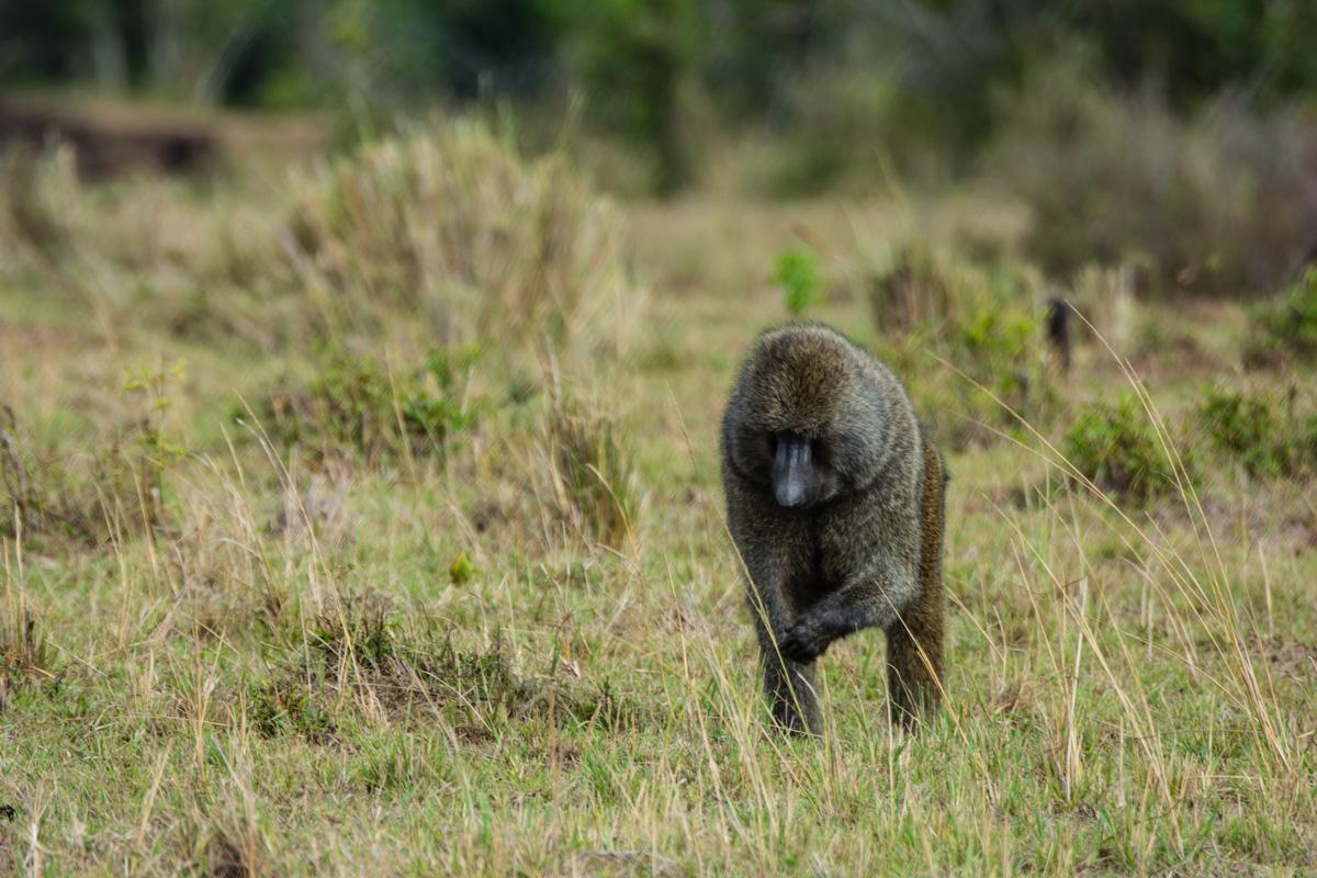 Jane_Walker_On Safari5.jpg