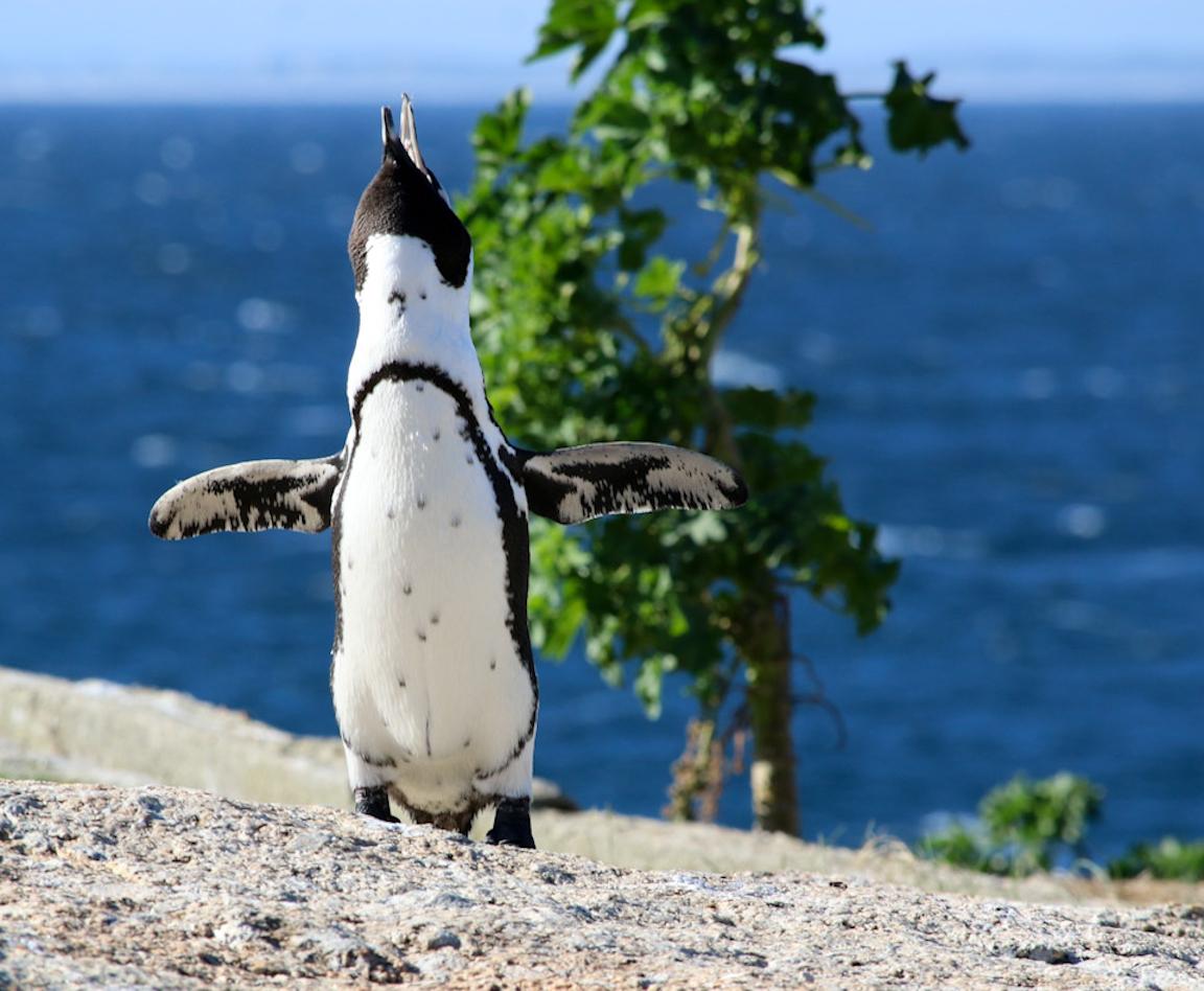 MP_Barnaby_Happy Penguin.jpg