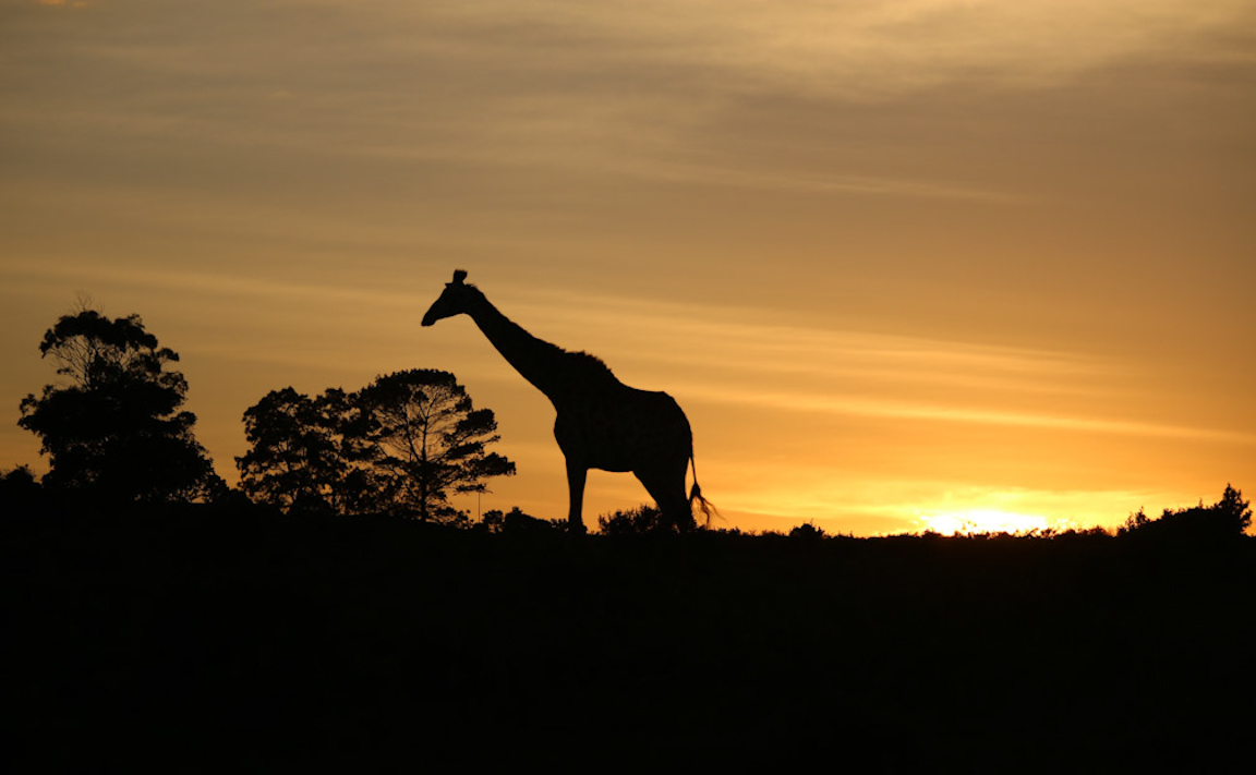MP_Barnaby_Sunset in South Africa.jpg