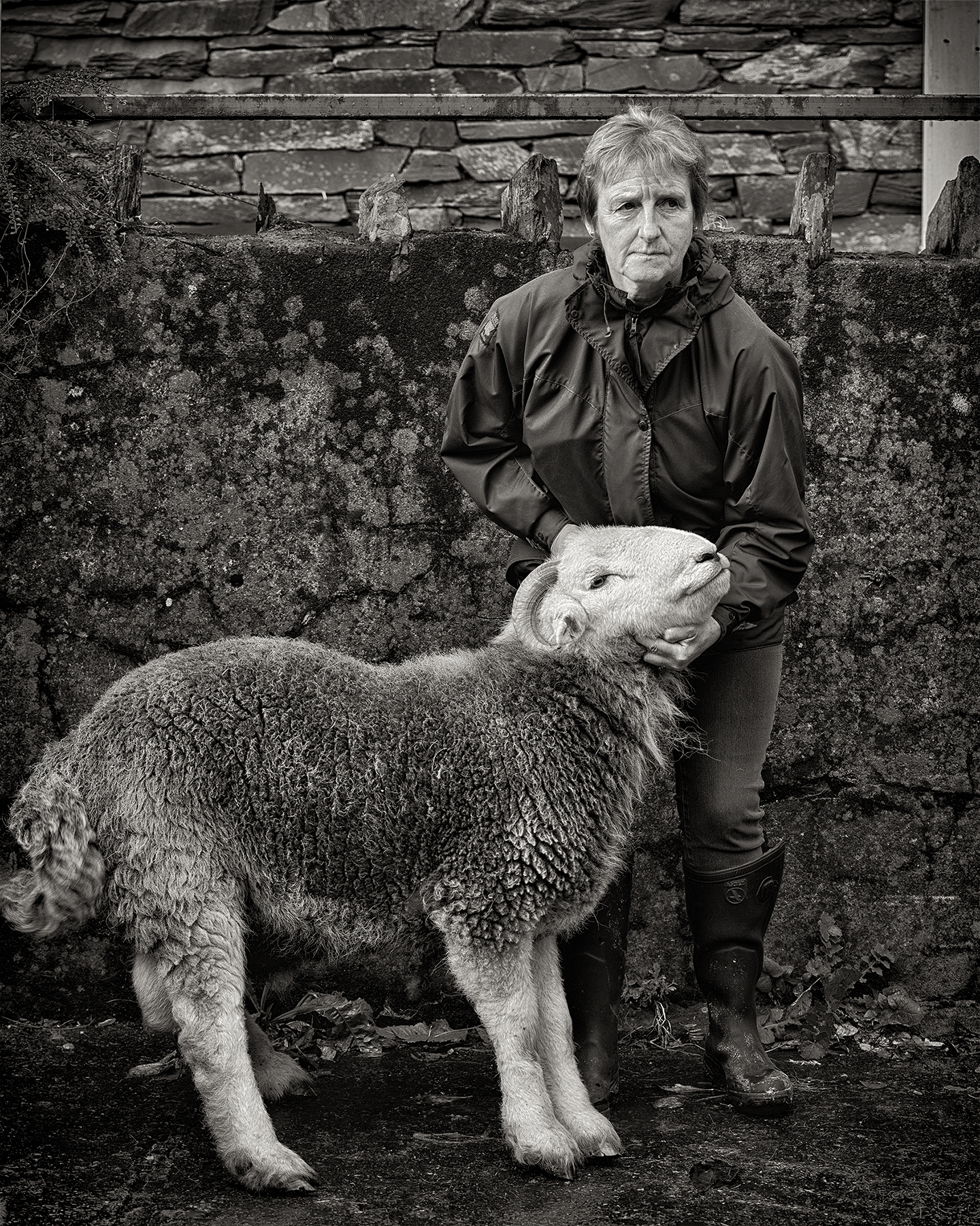 William_Bullard_Herdwick#3.jpg