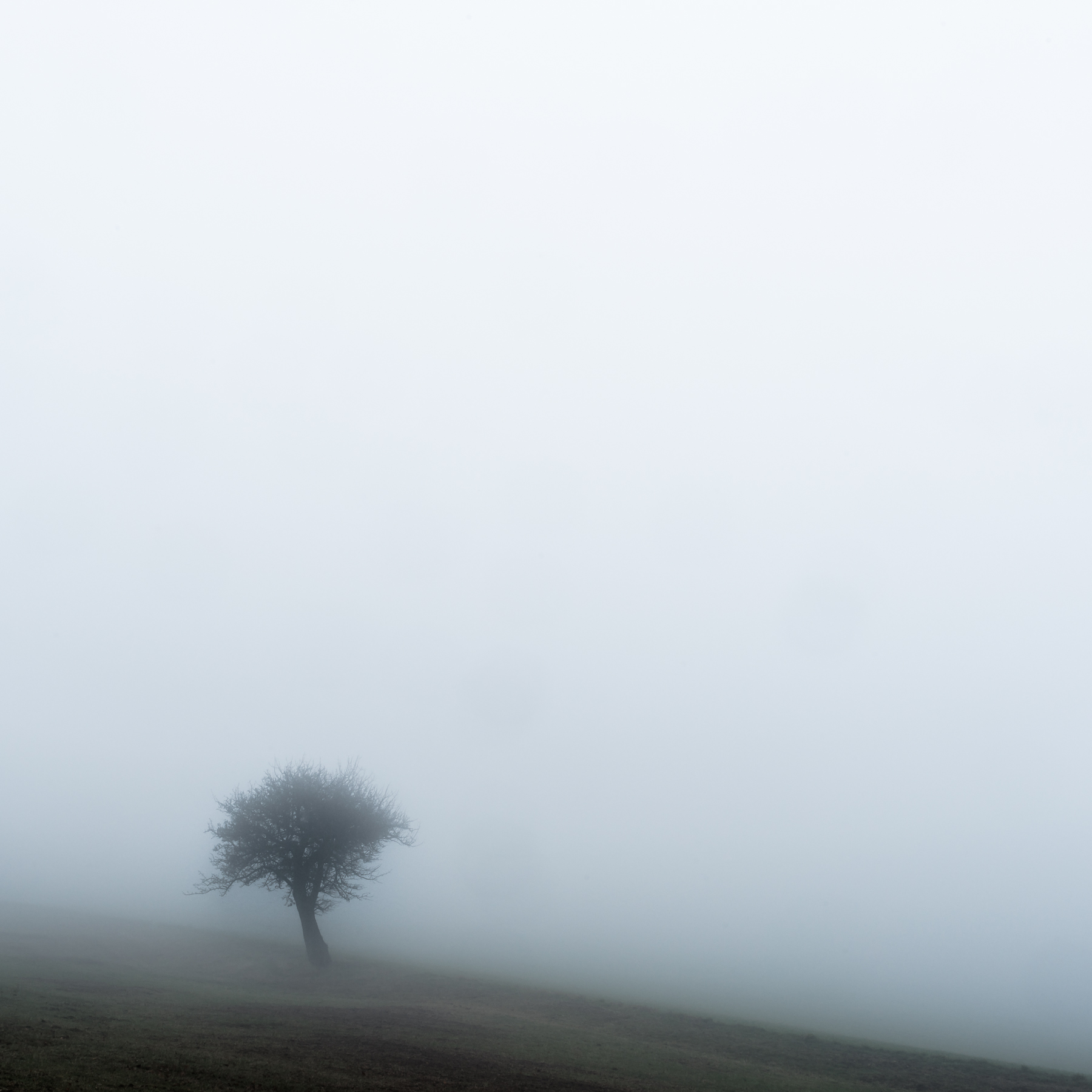 Harald_Weimann_Out of the Fog_Lost_1.jpg