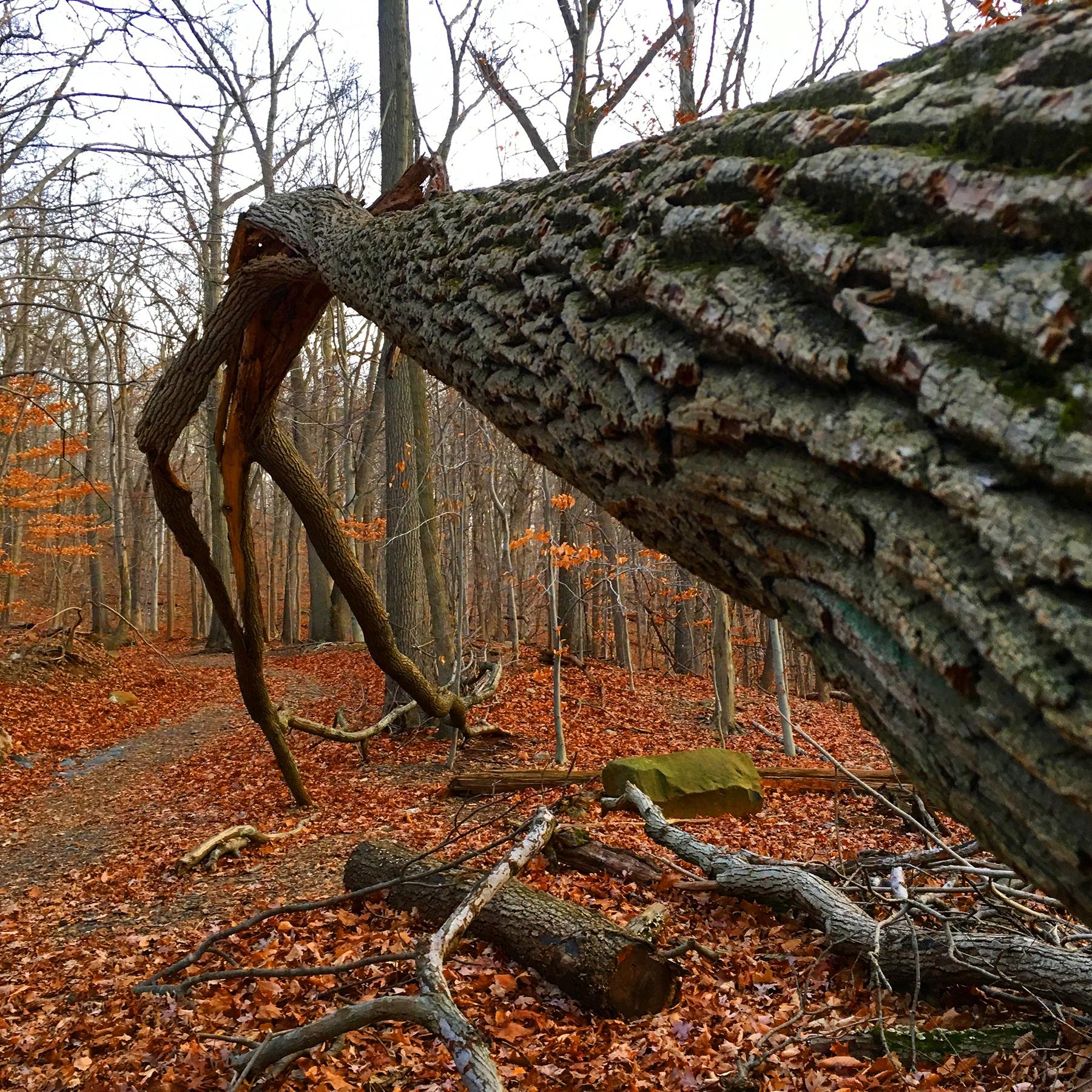 Gayle_Kirschenbaum_NaturesView_TreeMan_2.JPG