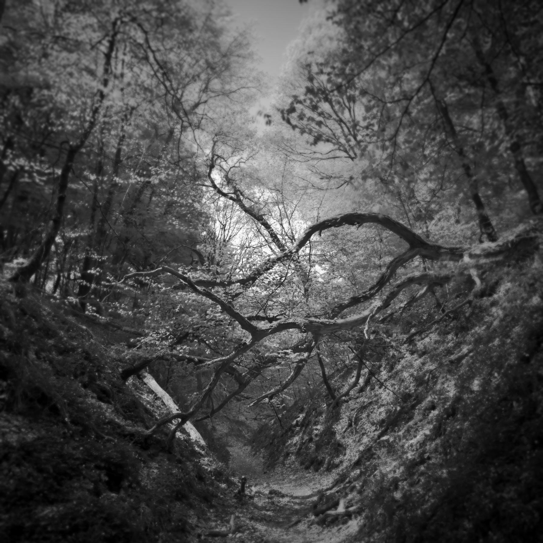 Rene_Roalf_Landscape_Hald.jpg