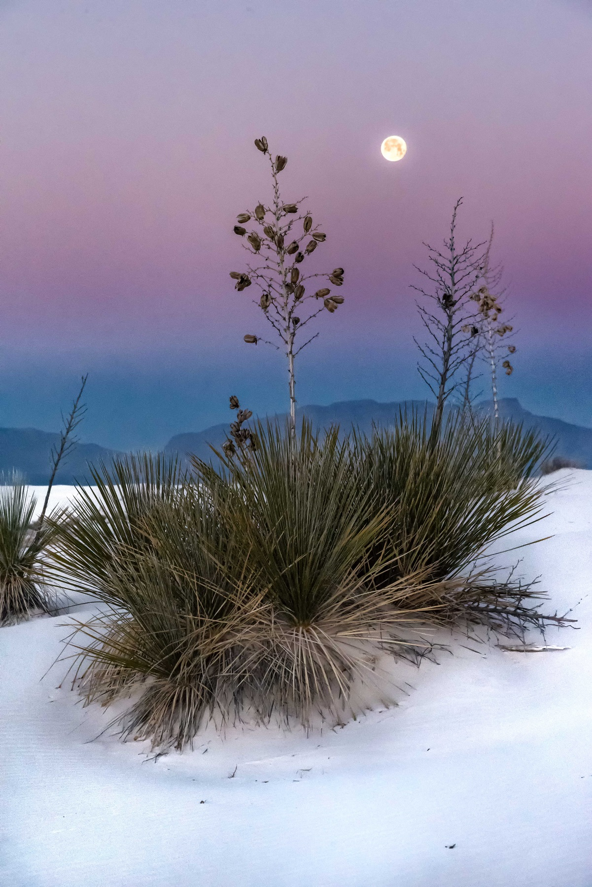 Kathleen Gerber- Moonset at White Sands.jpg
