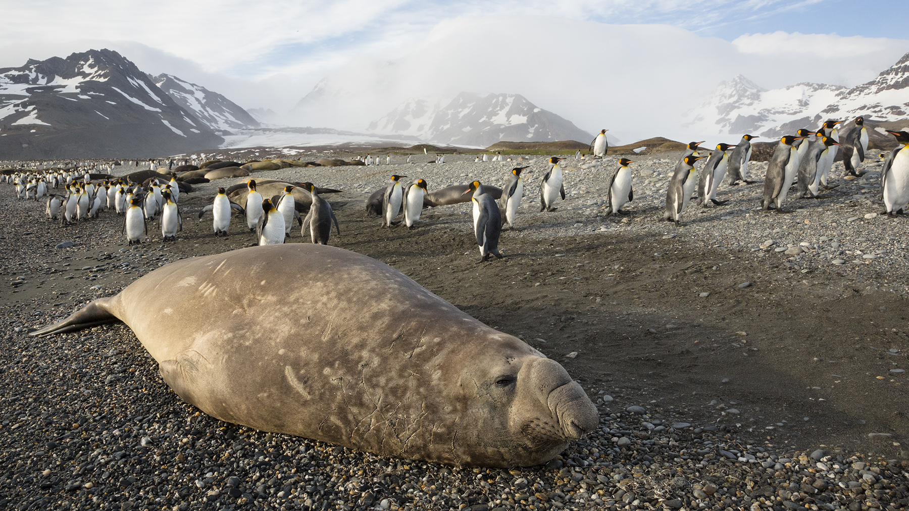 Brian_Jones_Elephant Seal Mating Season_Elephant Seal Resting_1.jpg