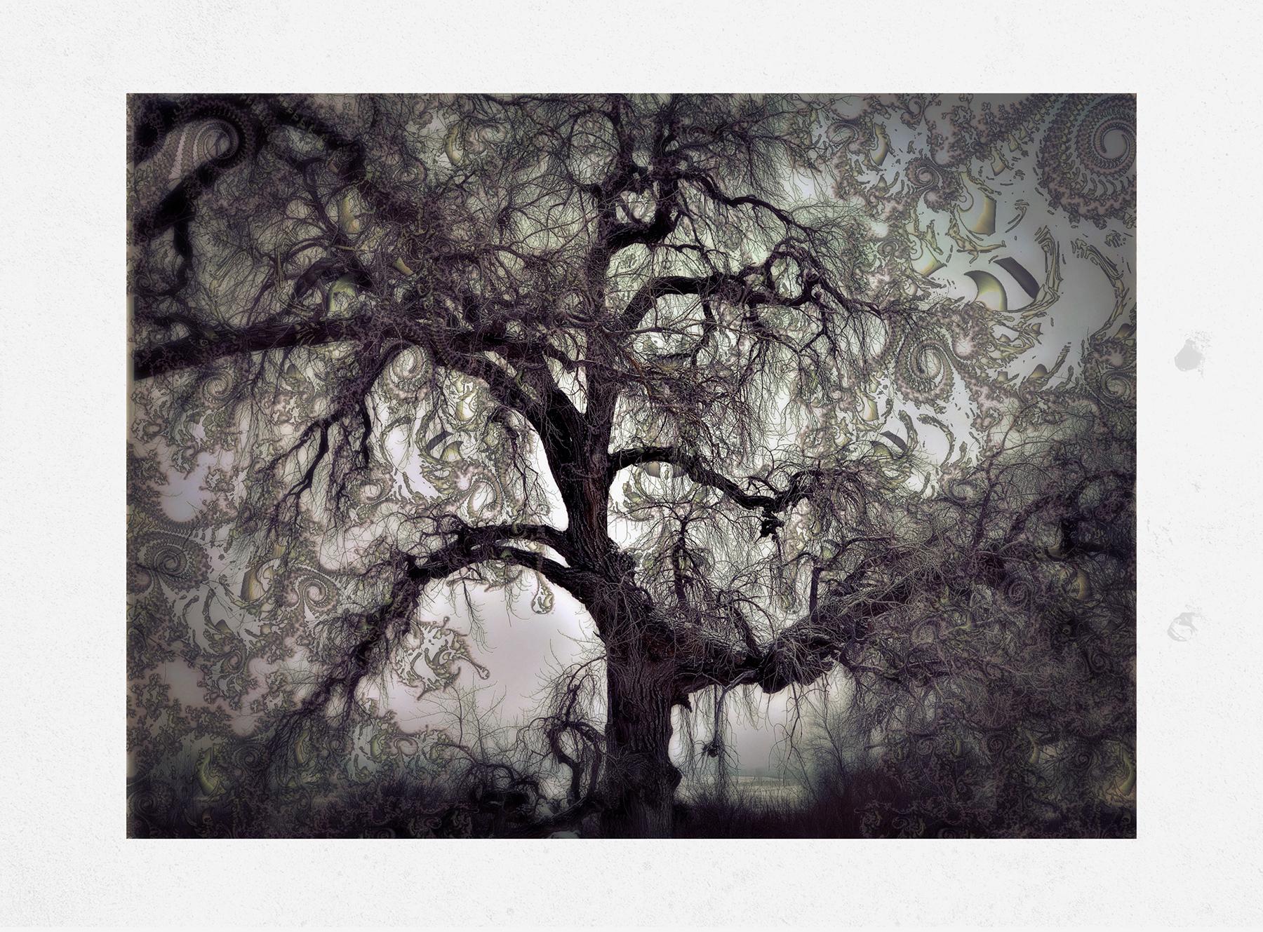 Kate_Zari Roberts_Nature Fractala_Tree Fractal_2.jpg