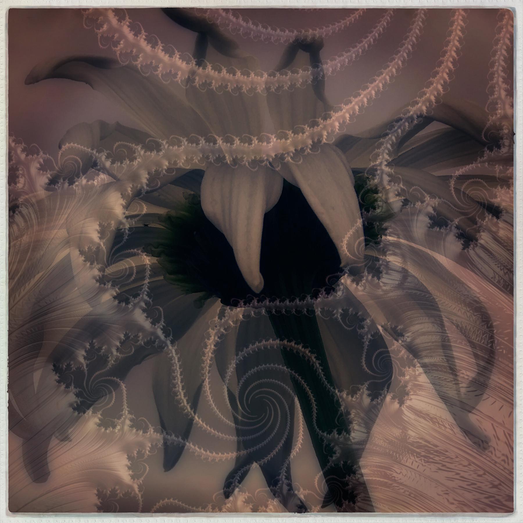 Kate_Zari Roberts_Nature Fractals_Flower Fractal_5.jpg