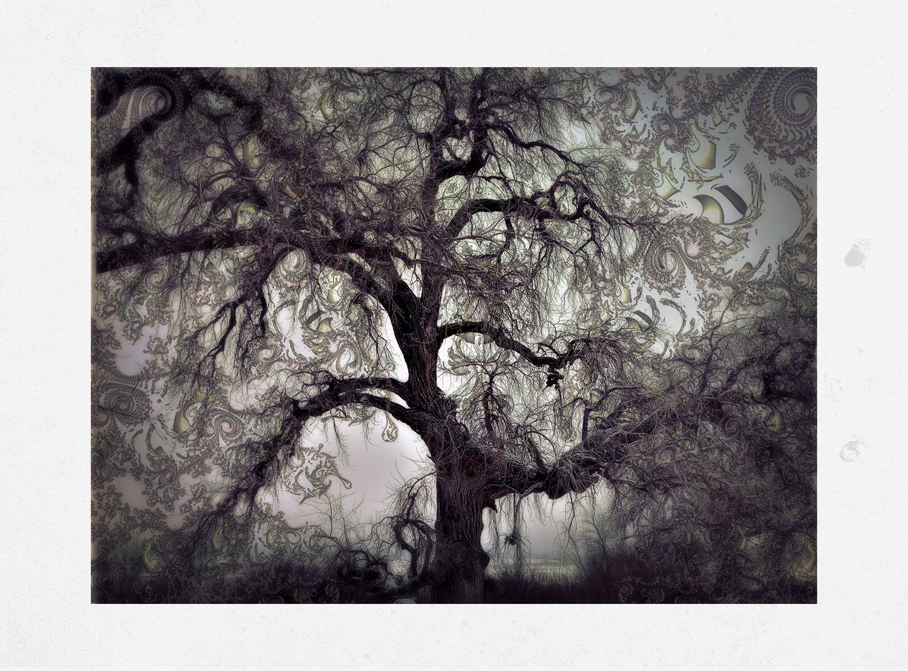 Kate_ZariRoberts_Nature Fractals_ Tree Fractal ll_2.jpg