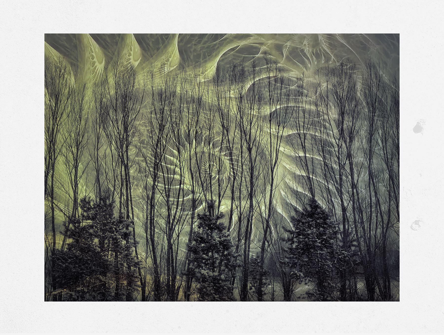 Kate_ZariRoberts_Nature Fractals_Tree Fractal l_1.jpg