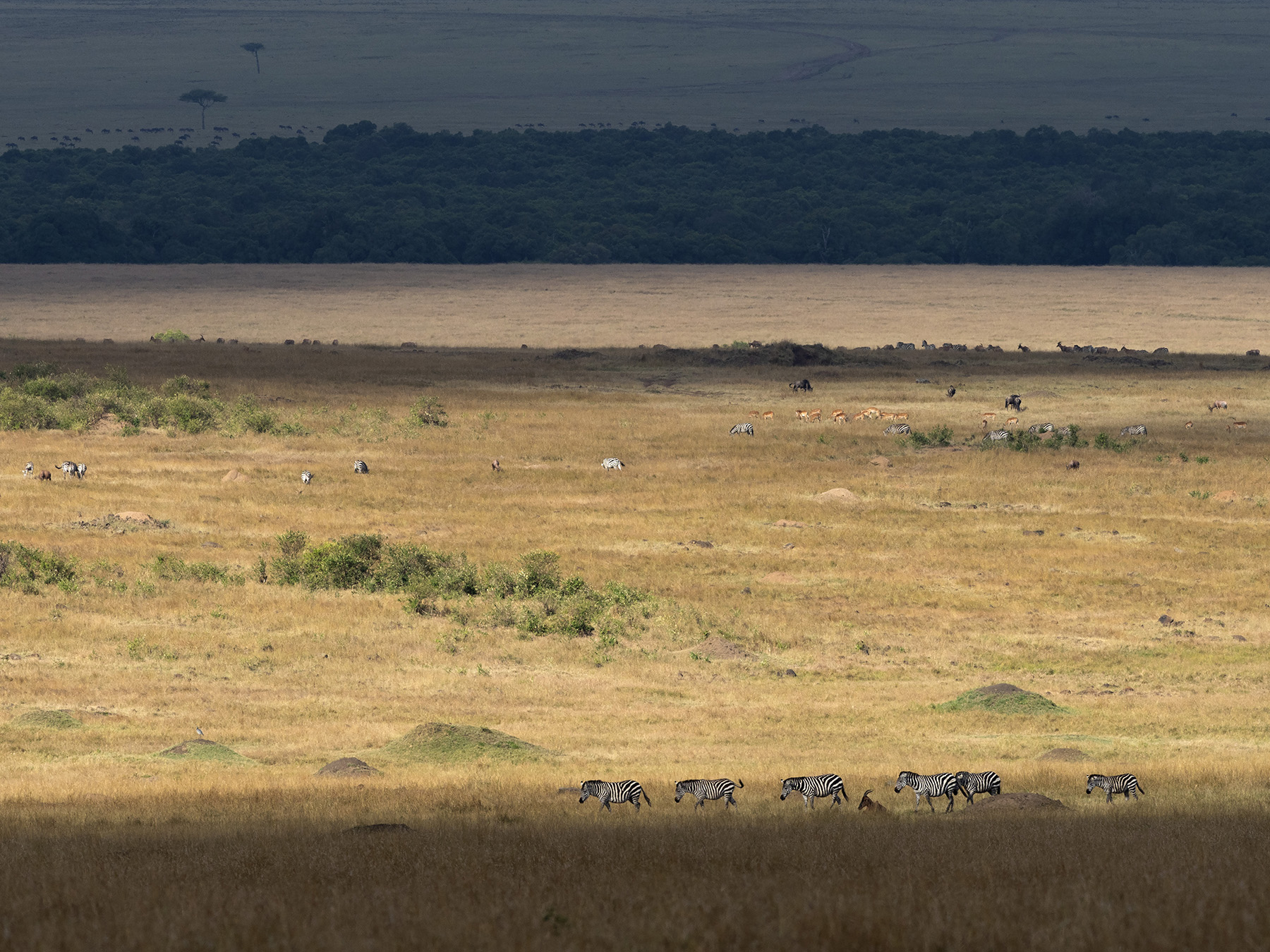 Ranjan_Ramchandani_Layers in the Mara.jpg
