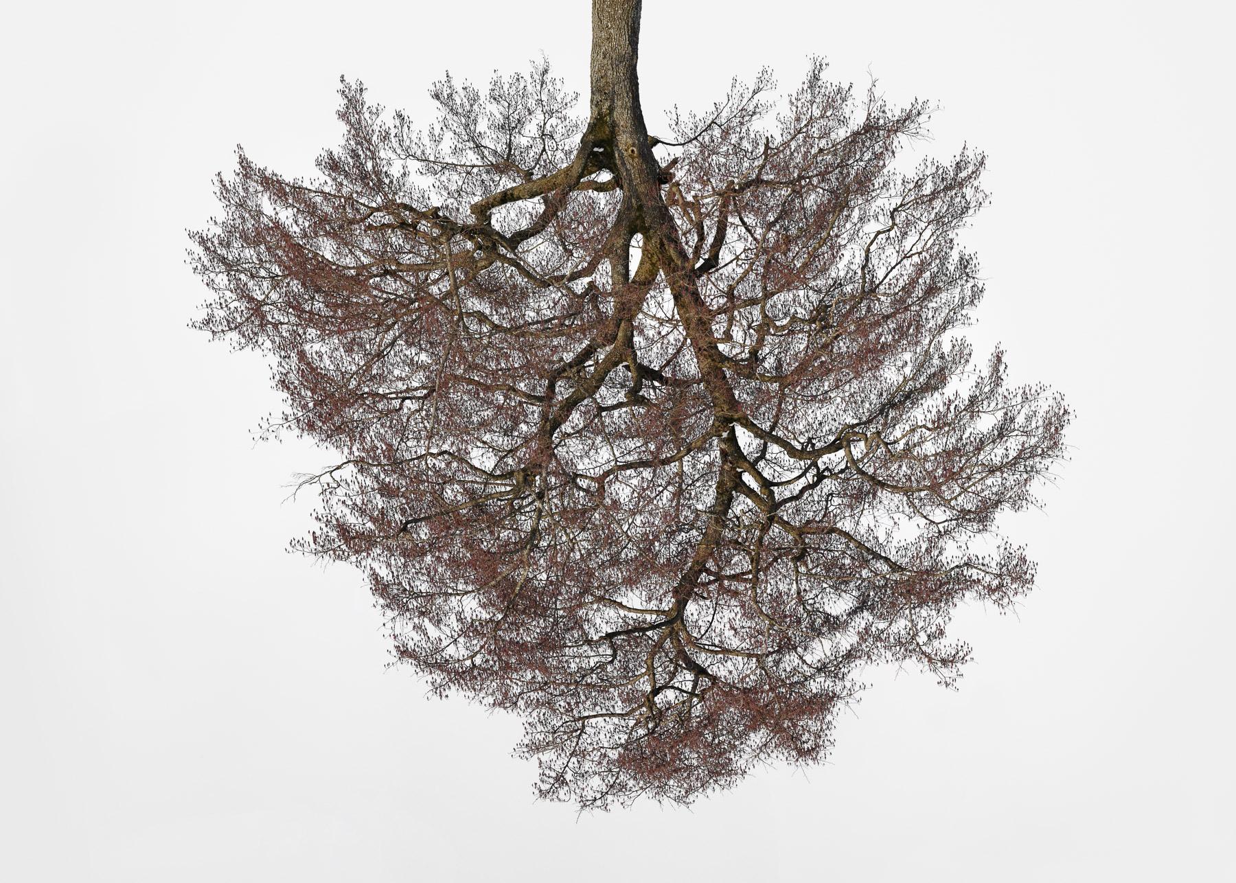 Christoph_Franke_Tree-Crowns_TC-02_01.jpg