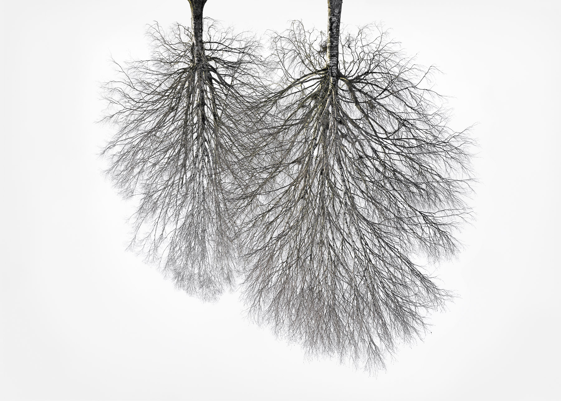 Christoph_Franke_Tree-Crowns_TC-19_04.jpg