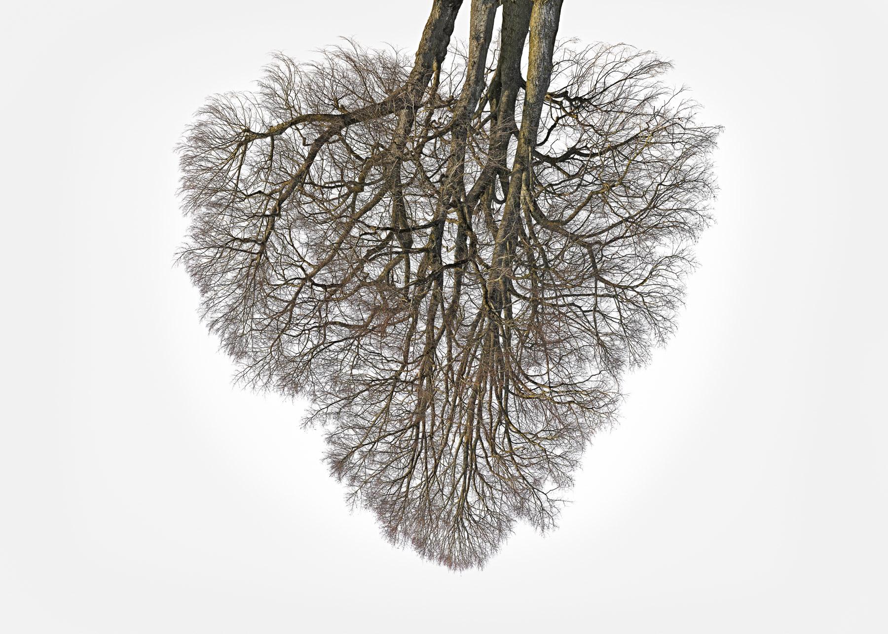 Christoph_Franke_Tree-Crowns_TC-23_02.jpg