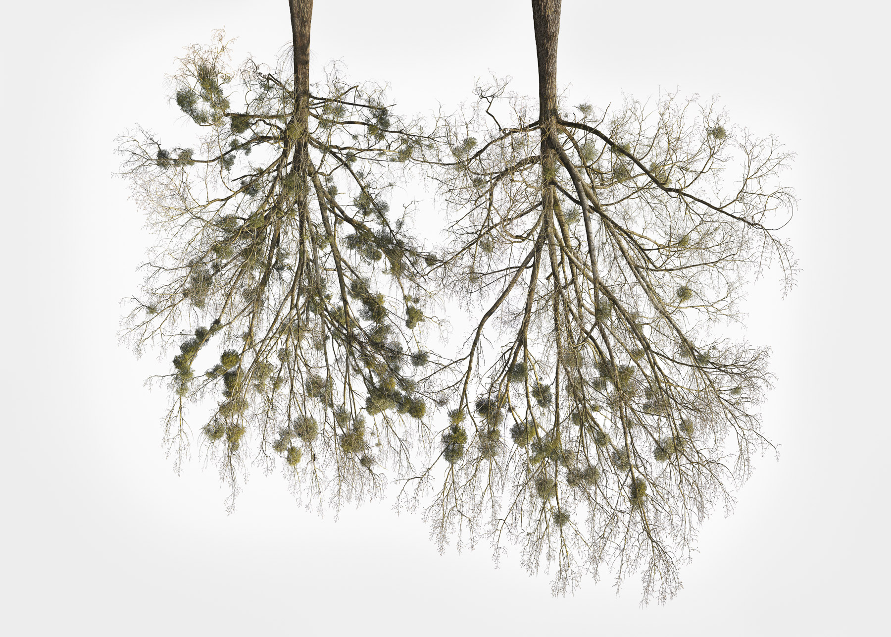 Christoph_Franke_Tree-Crowns_TC-27_05.jpg