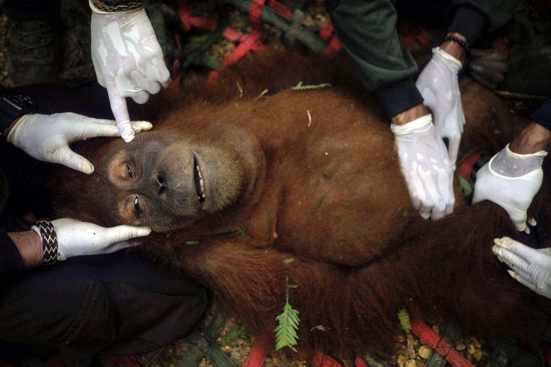 Alain_Schroeder_Saving_Orangutans_01.JPG
