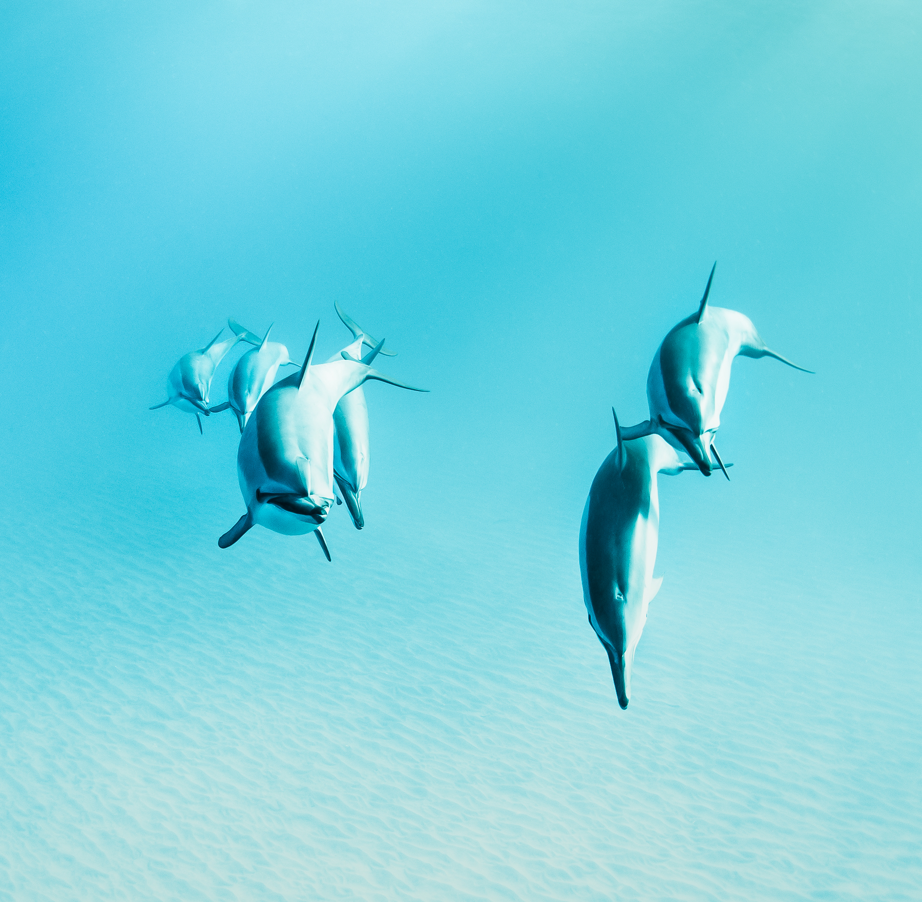 Sander_Cummings_Dolphins and Their Ways_Curious Turn_4.jpg