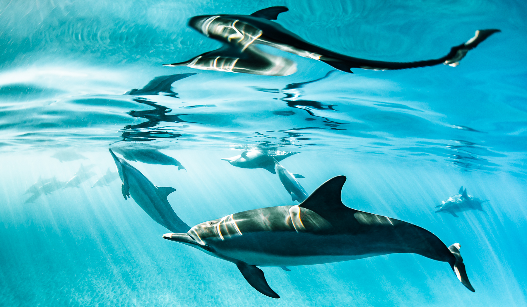 Sander_Cummings_Dolphins and Their Ways_Family Reflections_1.jpg