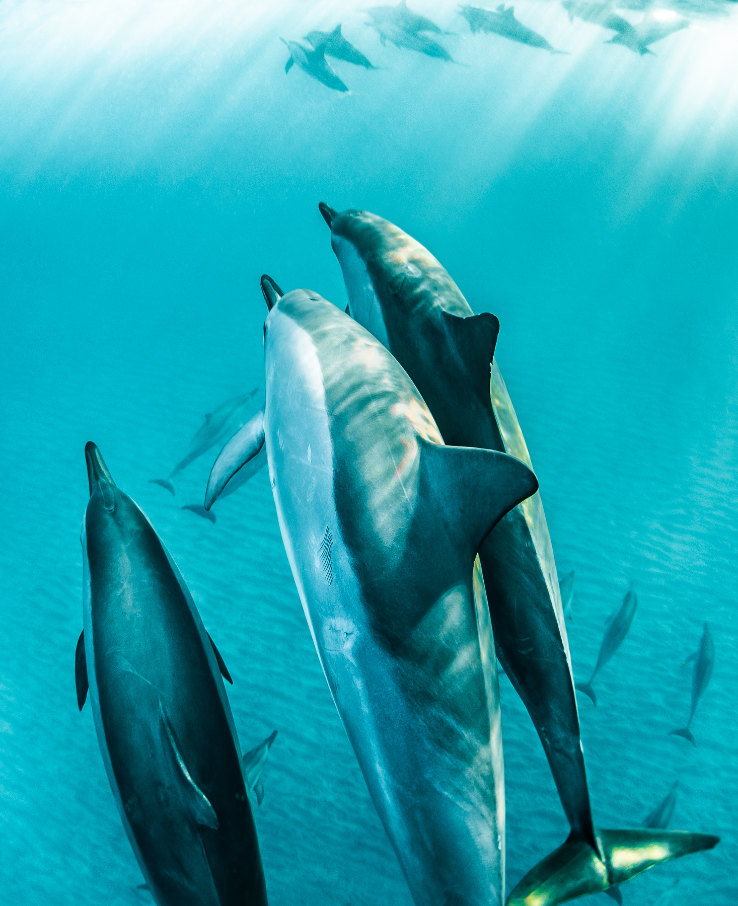 Sander_Cummings_Dolphins and Their Ways_Sunrise Joy_2.jpg