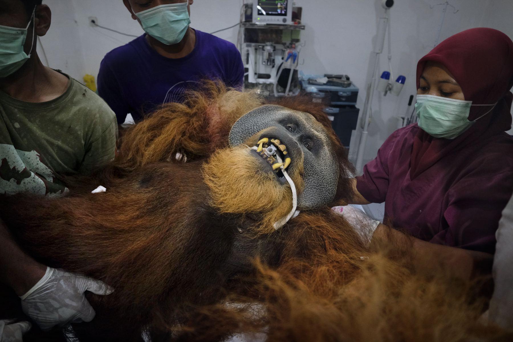 Alain_Schroeder_Saving_Orangutans_02.JPG