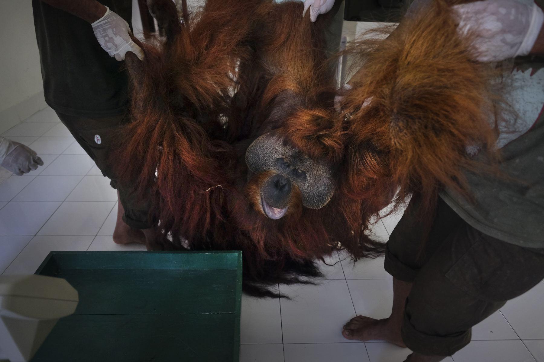 Alain_Schroeder_Saving_Orangutans_03.JPG