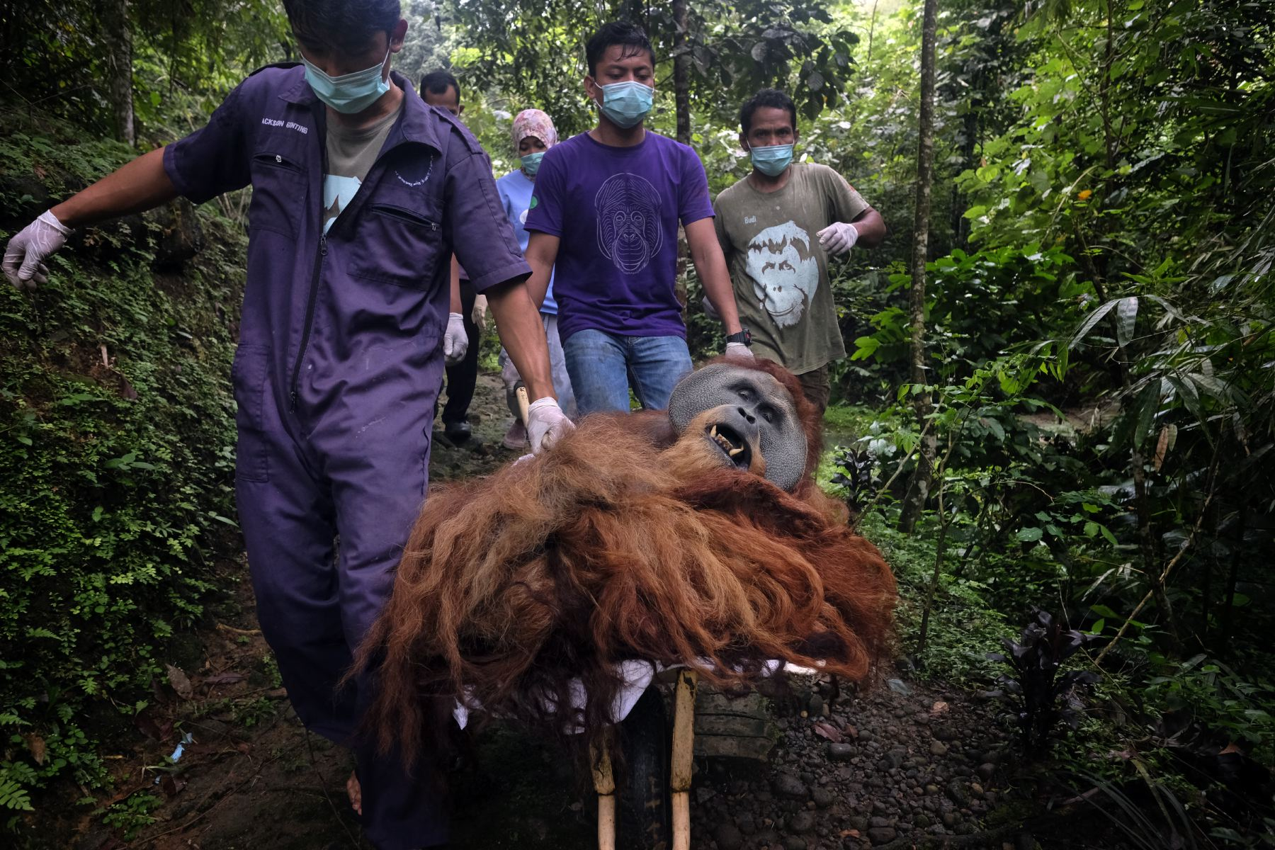 Alain_Schroeder_Saving_Orangutans_04.JPG