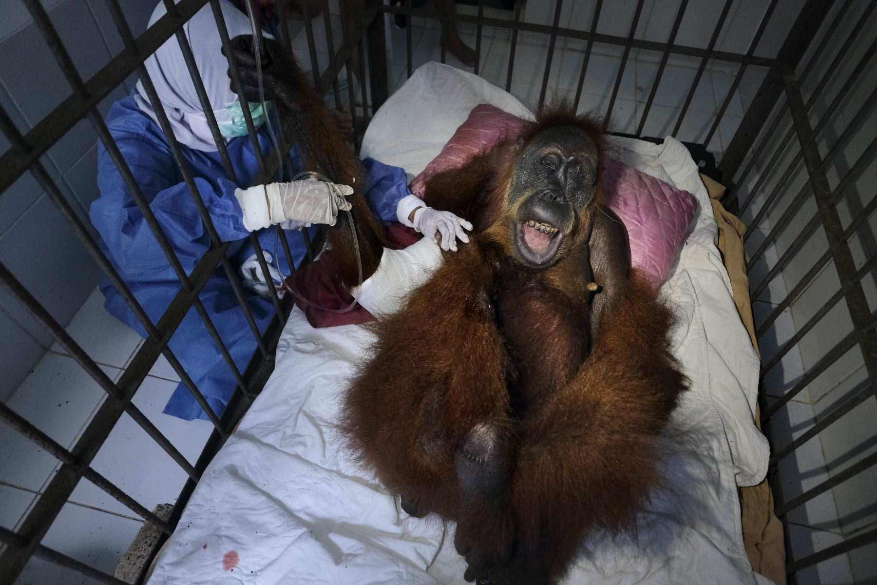 Alain_Schroeder_Saving_Orangutans_06.JPG