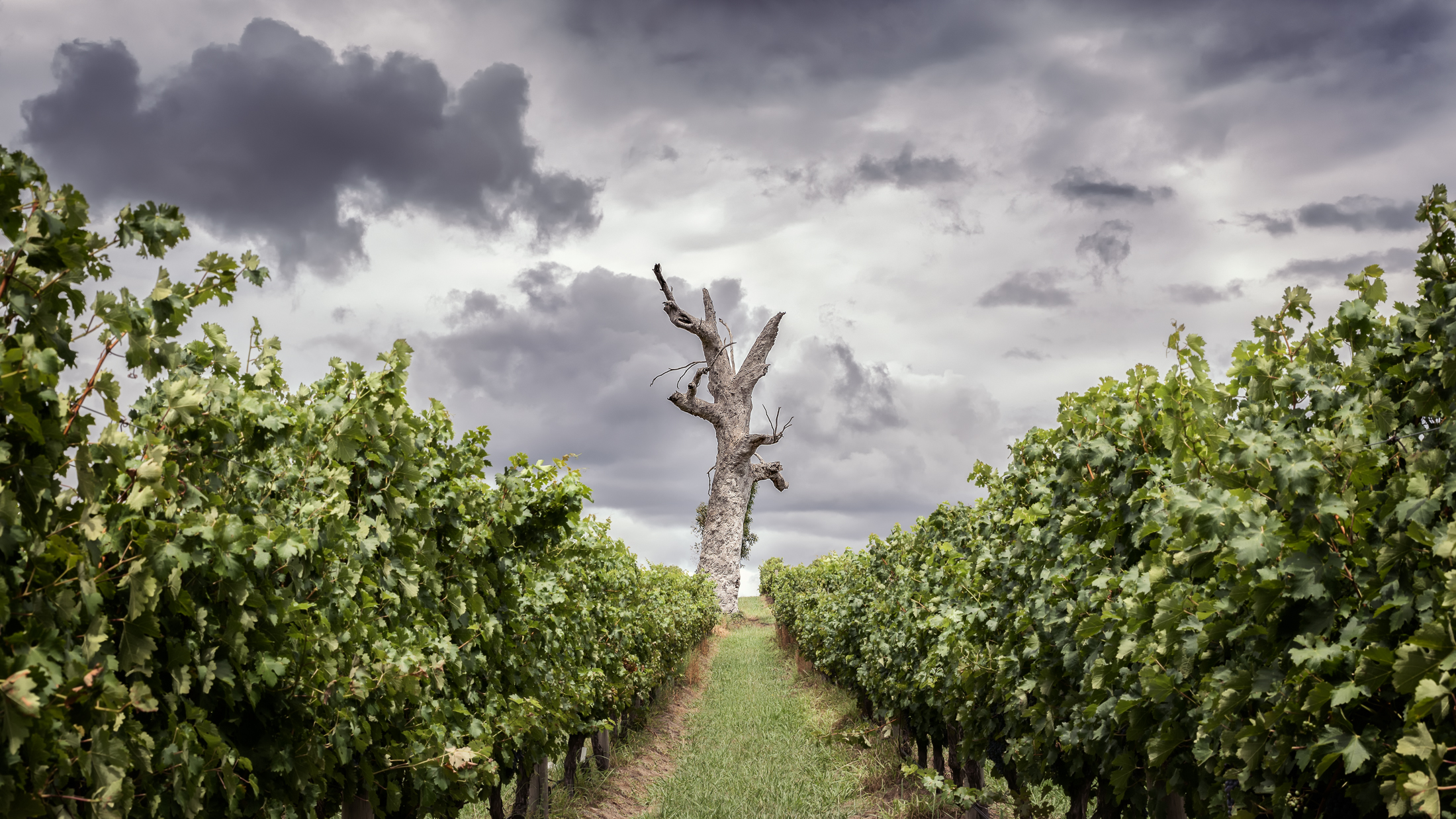 The Sentinel - Yarra Glen (Victoria, Australia) - Photo by Paul Tadday