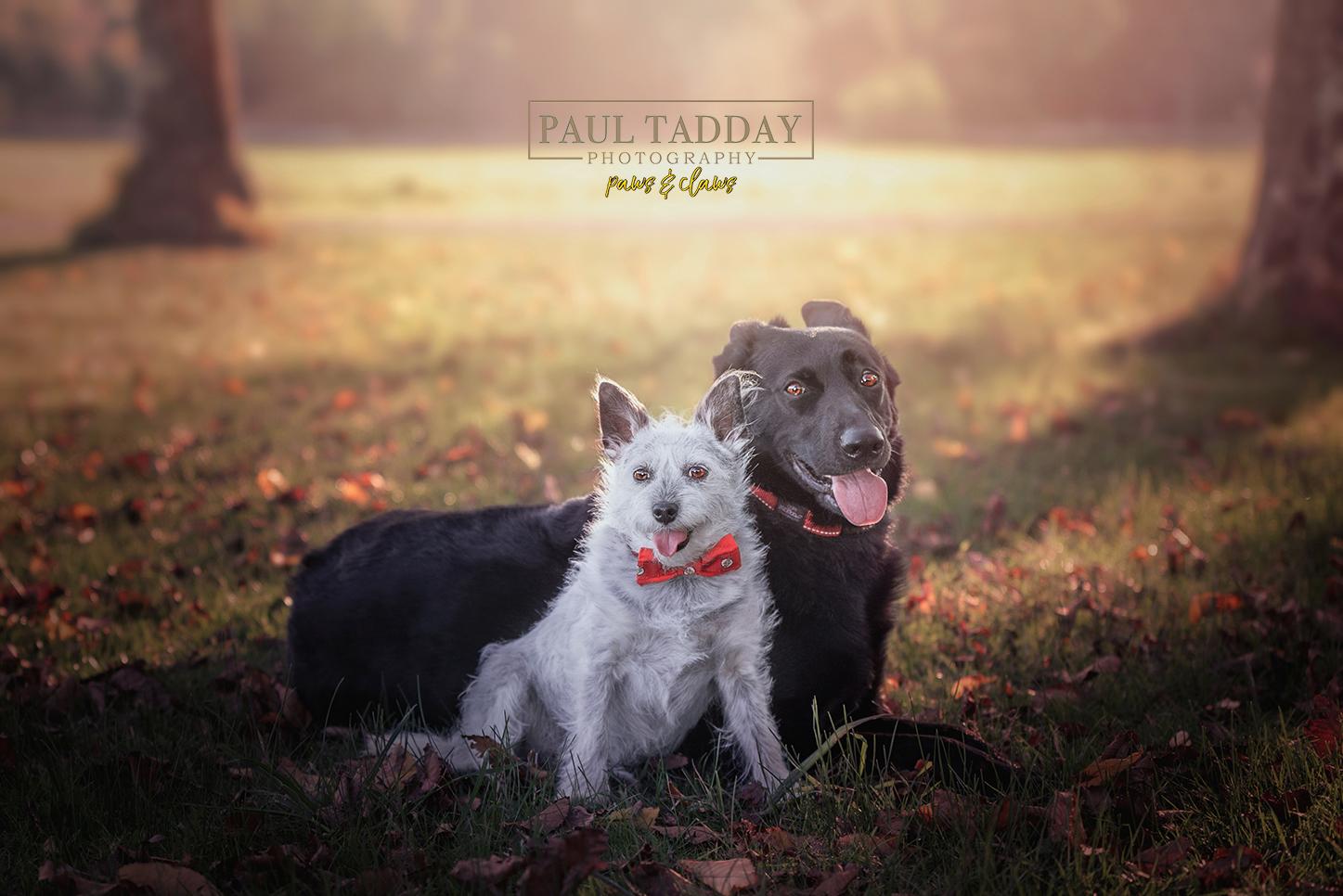 2020 Rescue Dogs Calendar -