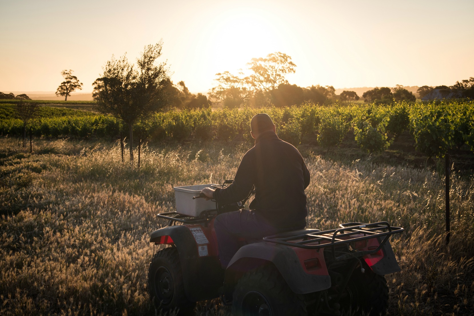 James heading out to the vineyard on his trusty quad bike.