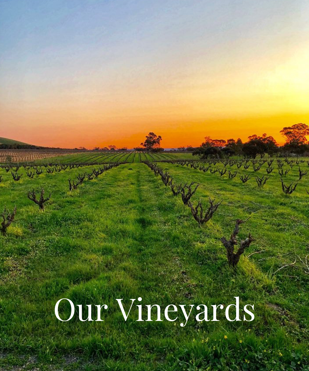 Our Vineyards.png