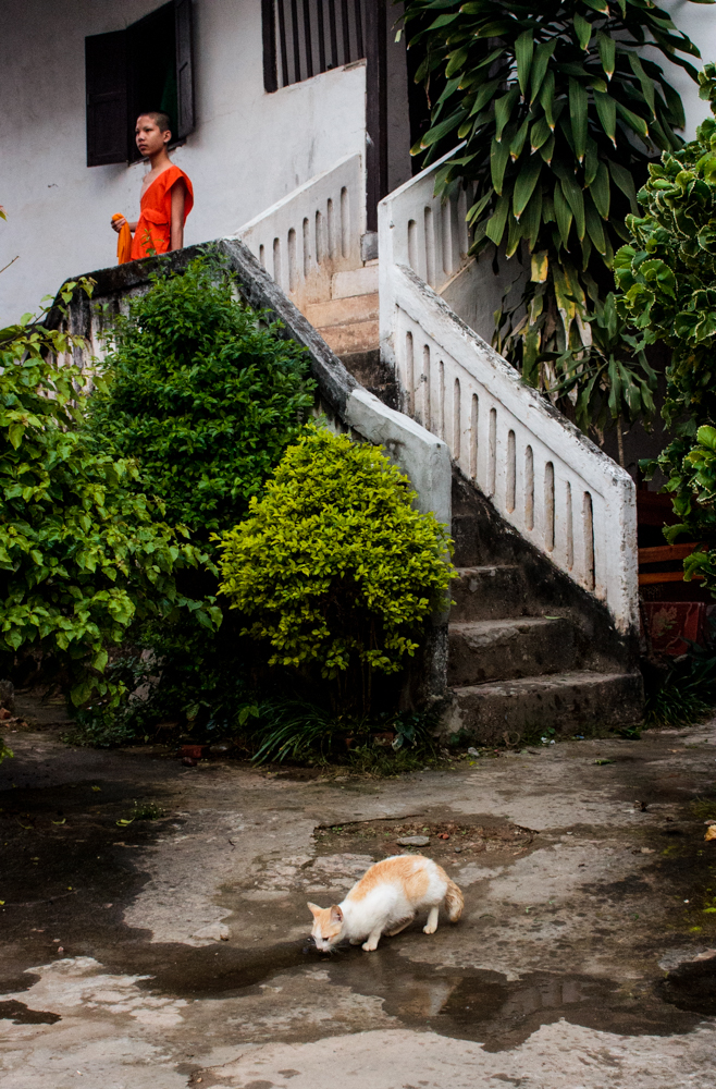 Cat With Monk, Laos