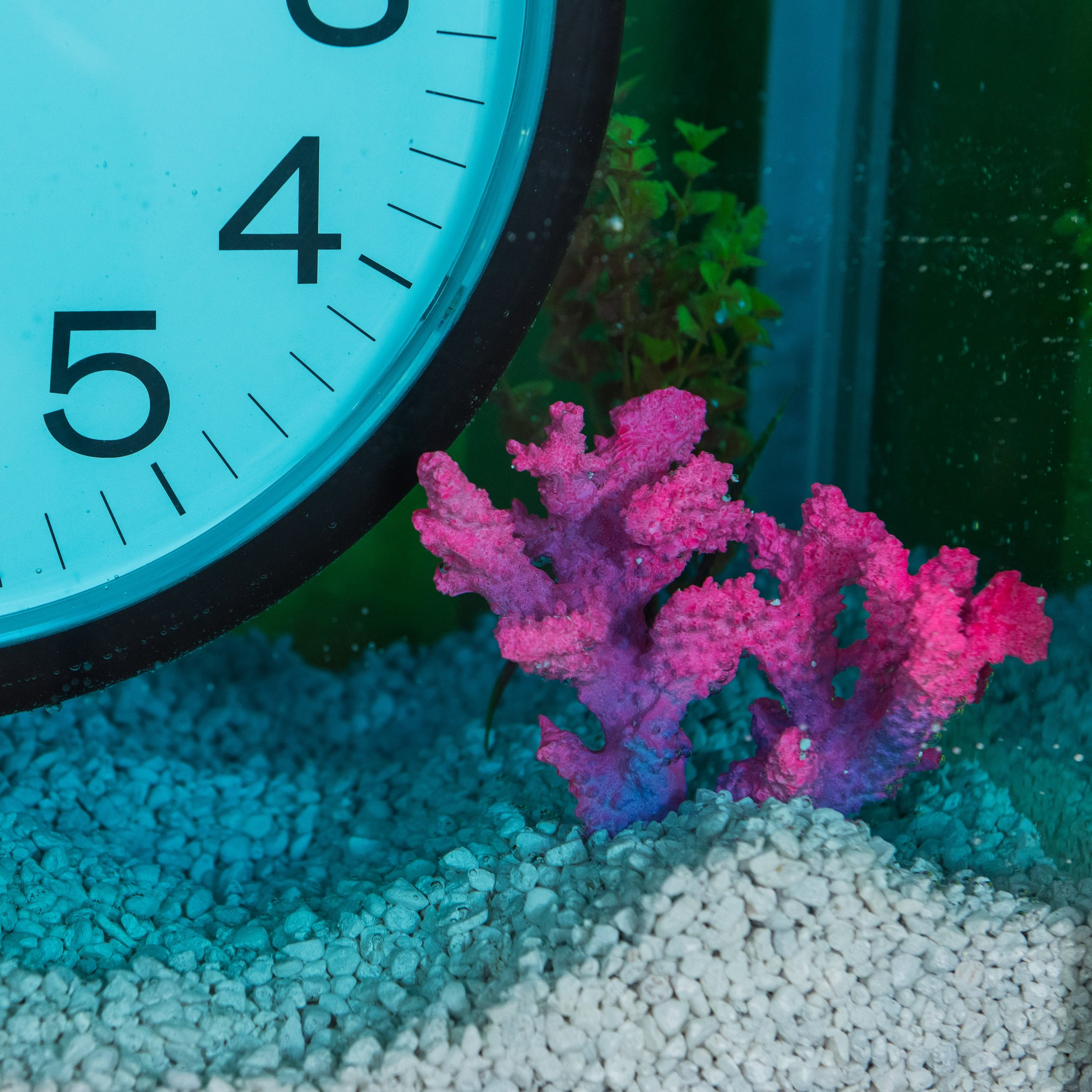 "I die for all mysterious things. (after Félix González-Torres and Damien Hirst)  (detail)  2018  clocks, glass tank, powder coated steel frame, pipes, spray paint, wiring, batteries, switch, water, food coloring, aquarium gravel, fake plants and coral  28"" x 40"" x 13"""