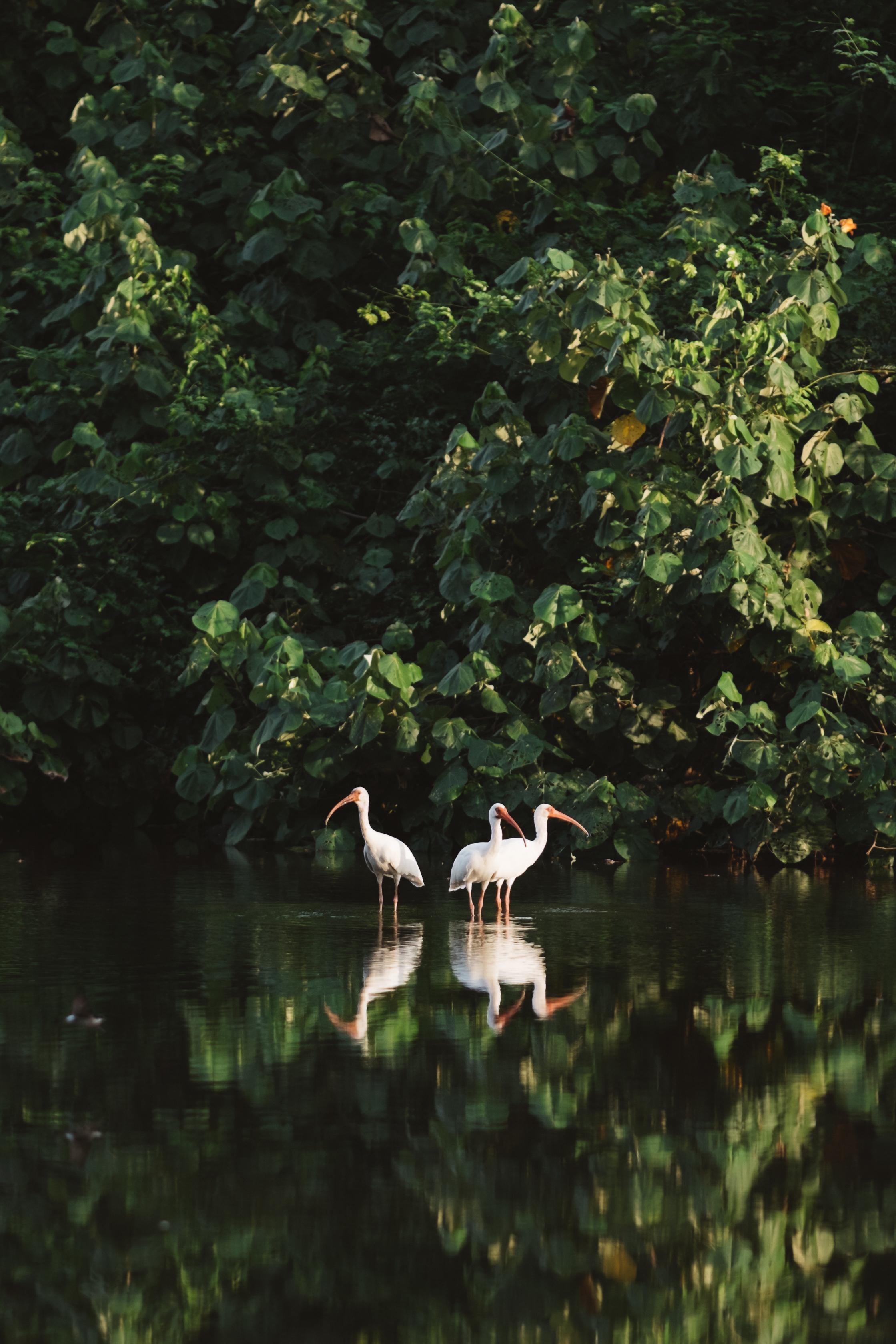 Costa Rica site-12.jpg