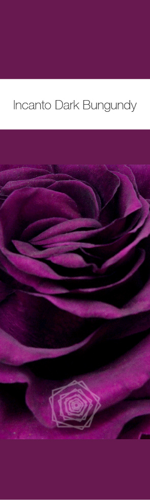 Dark Burgundy.jpg