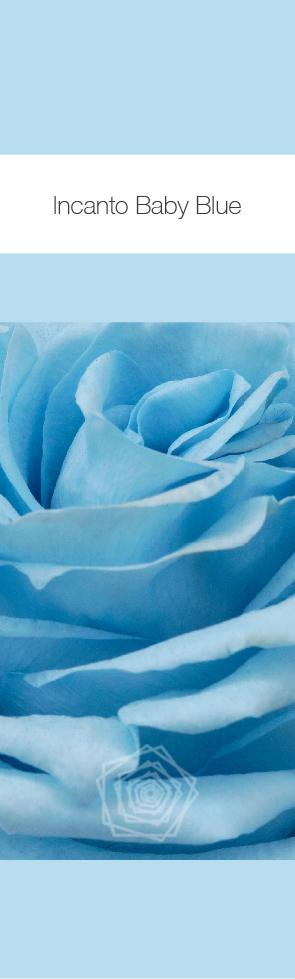 Baby Blue.jpg