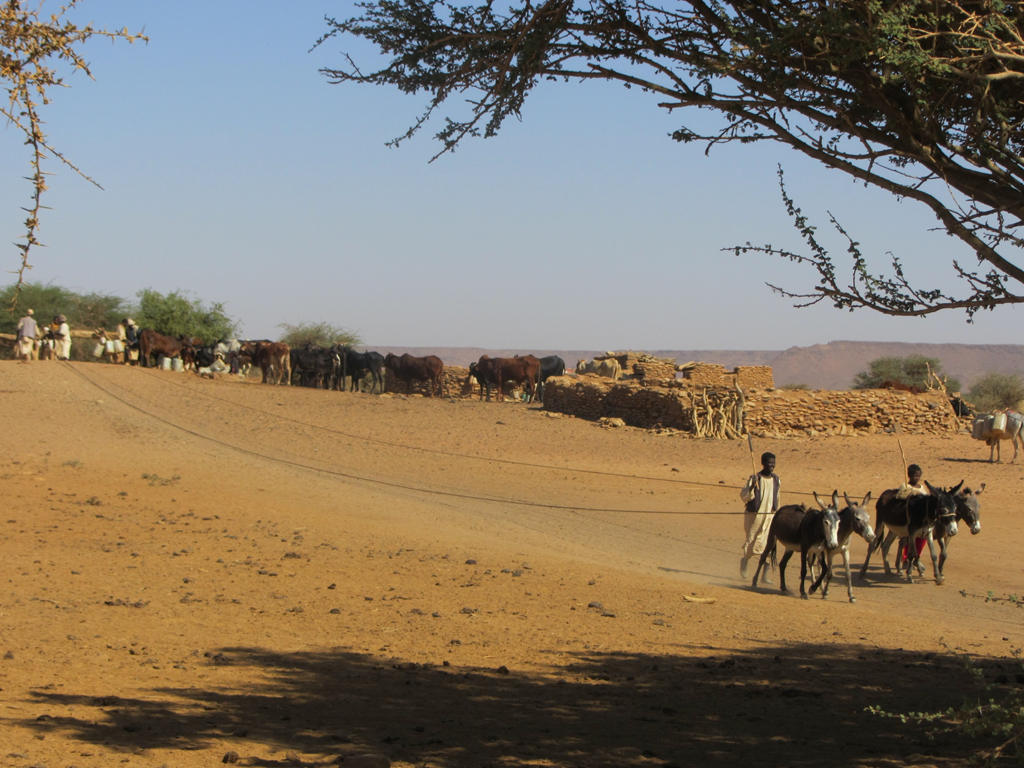 During the dry season, wells like this are the only source of water for many local populations.