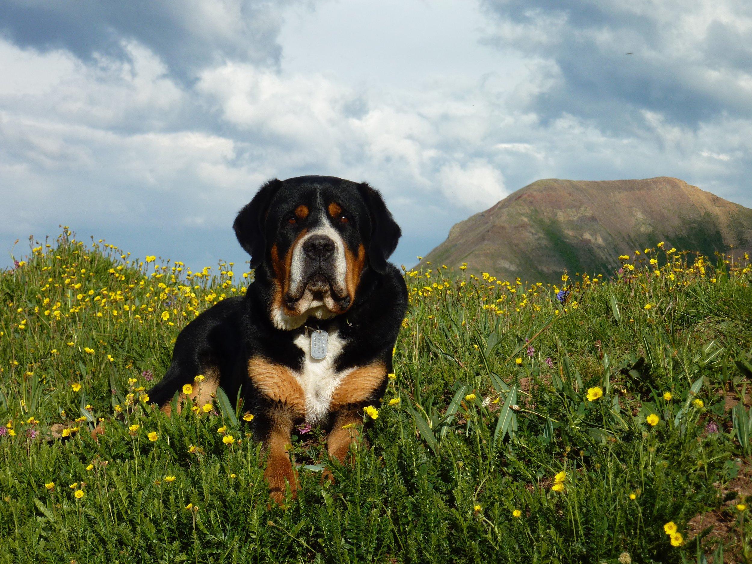 Hans with wildflowers.jpg