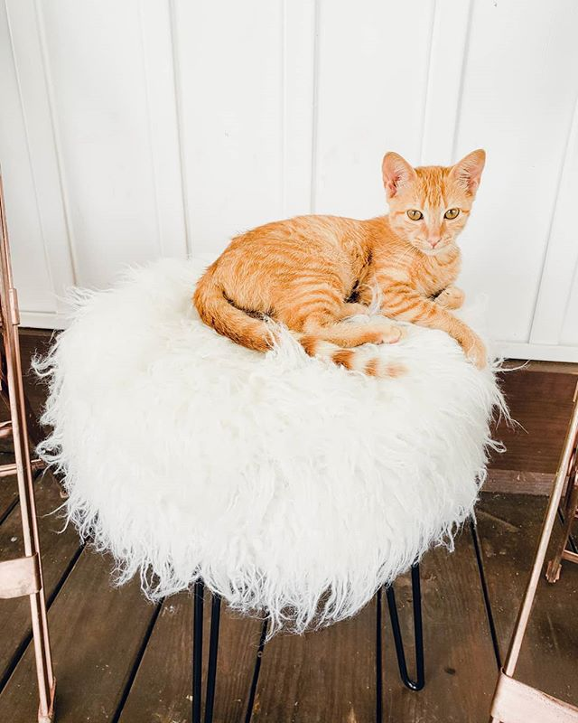 The real superstar of the @lovesickweddingfestivalar was this super sweet and adorable orange kitten. Not only is she so cute but she greeted all of our brides. Plus, she parked herself next the the @globetrotter_bar Bubbly Bar which makes her a cool cat. 💗🐱🥂