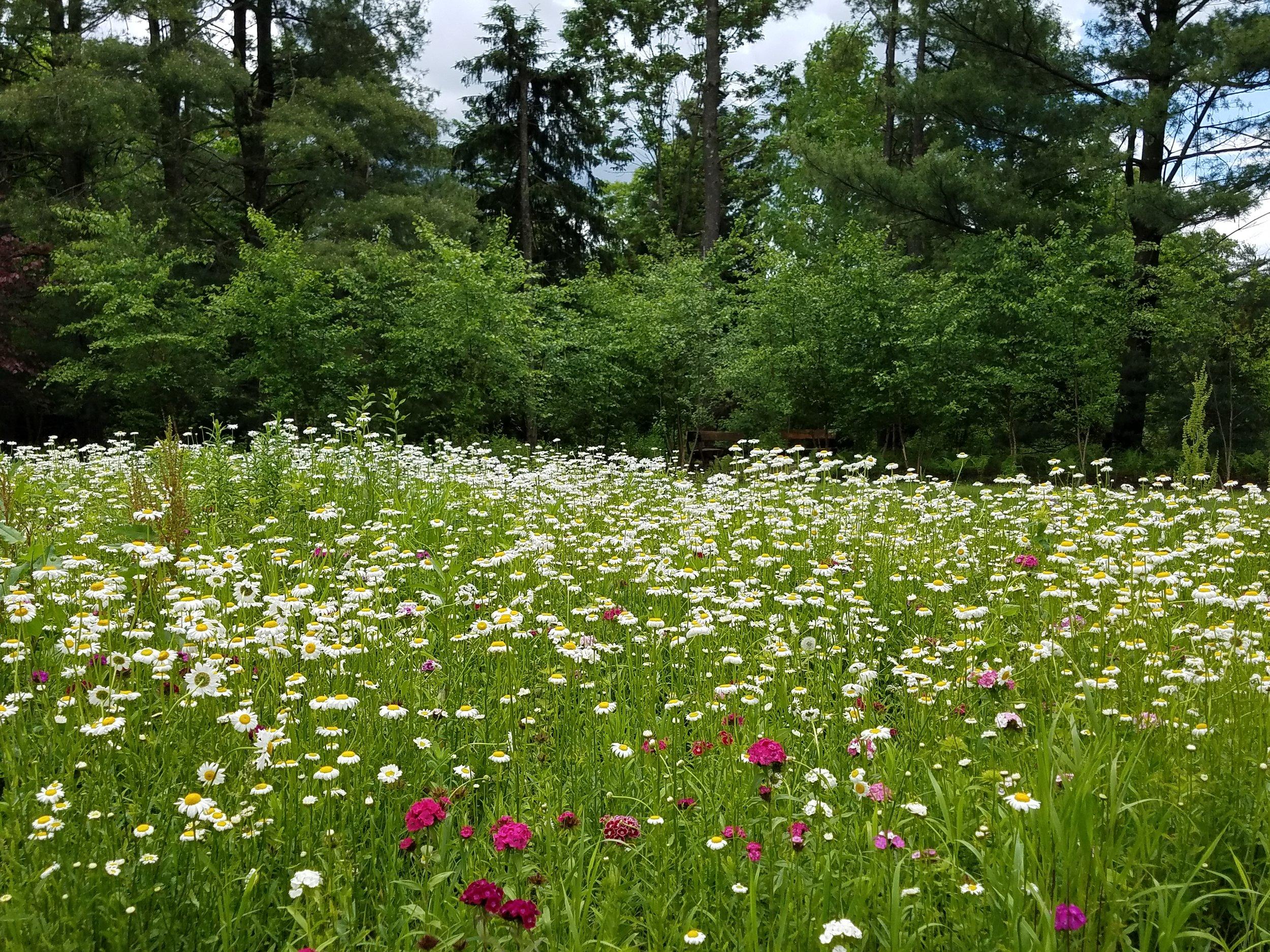 meadow planting.jpg
