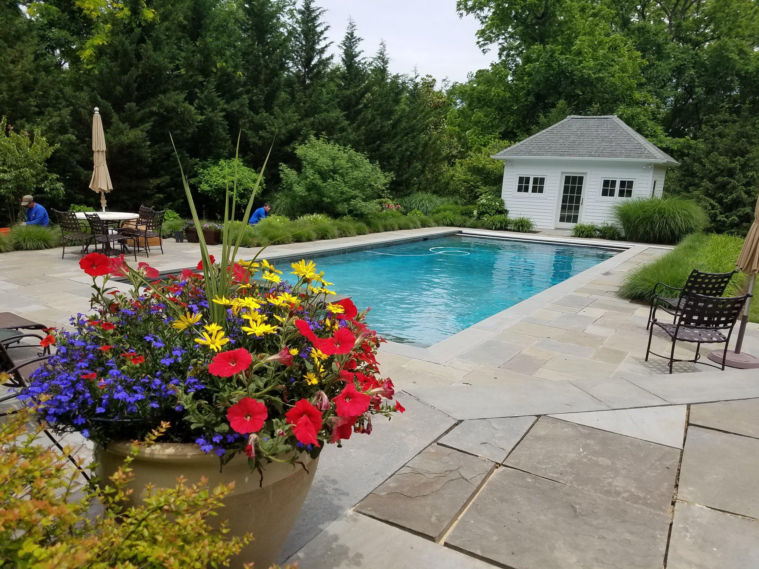 estate maintenance summer pot planted.jpg
