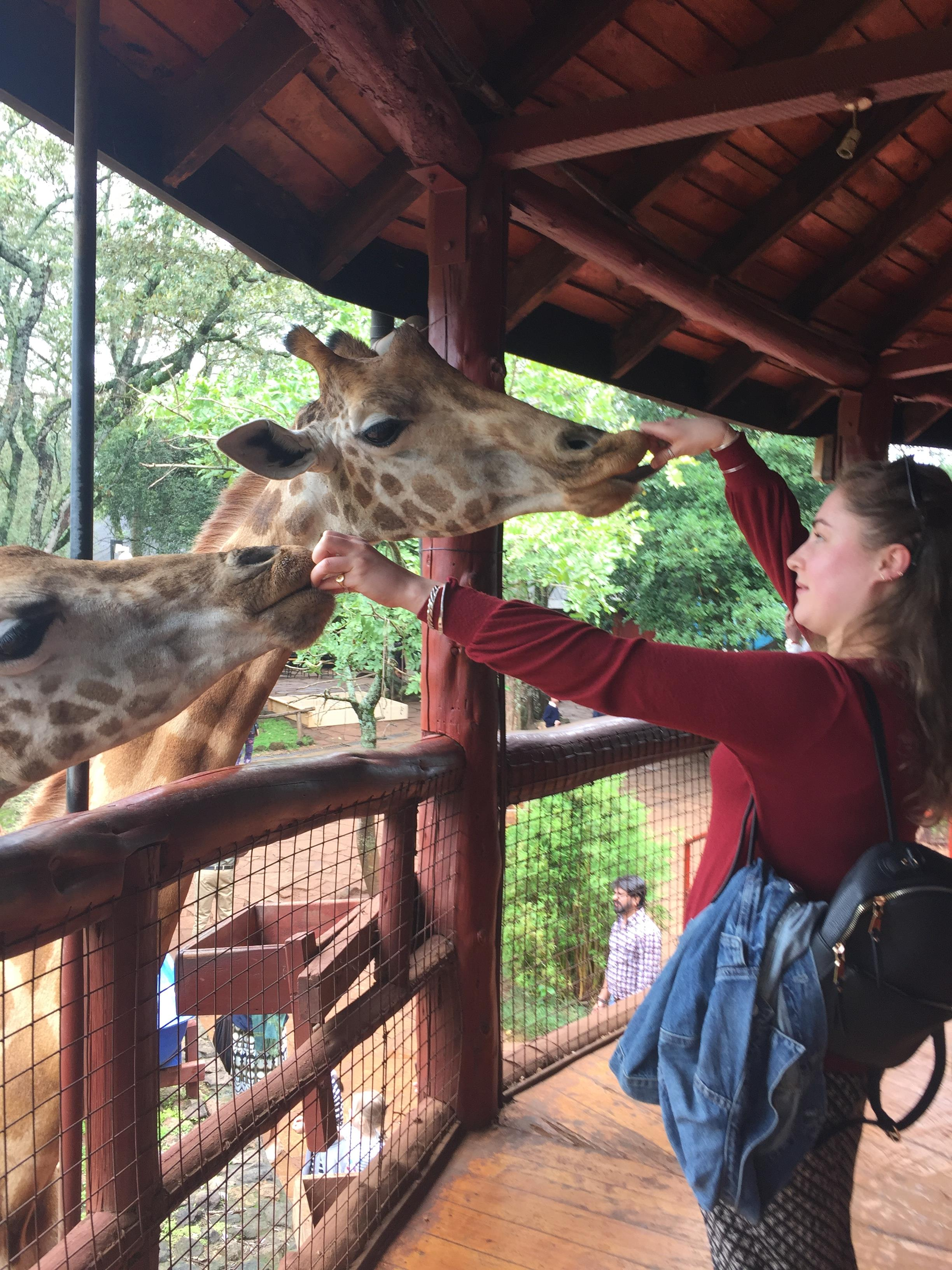 Marth giraffes.JPG