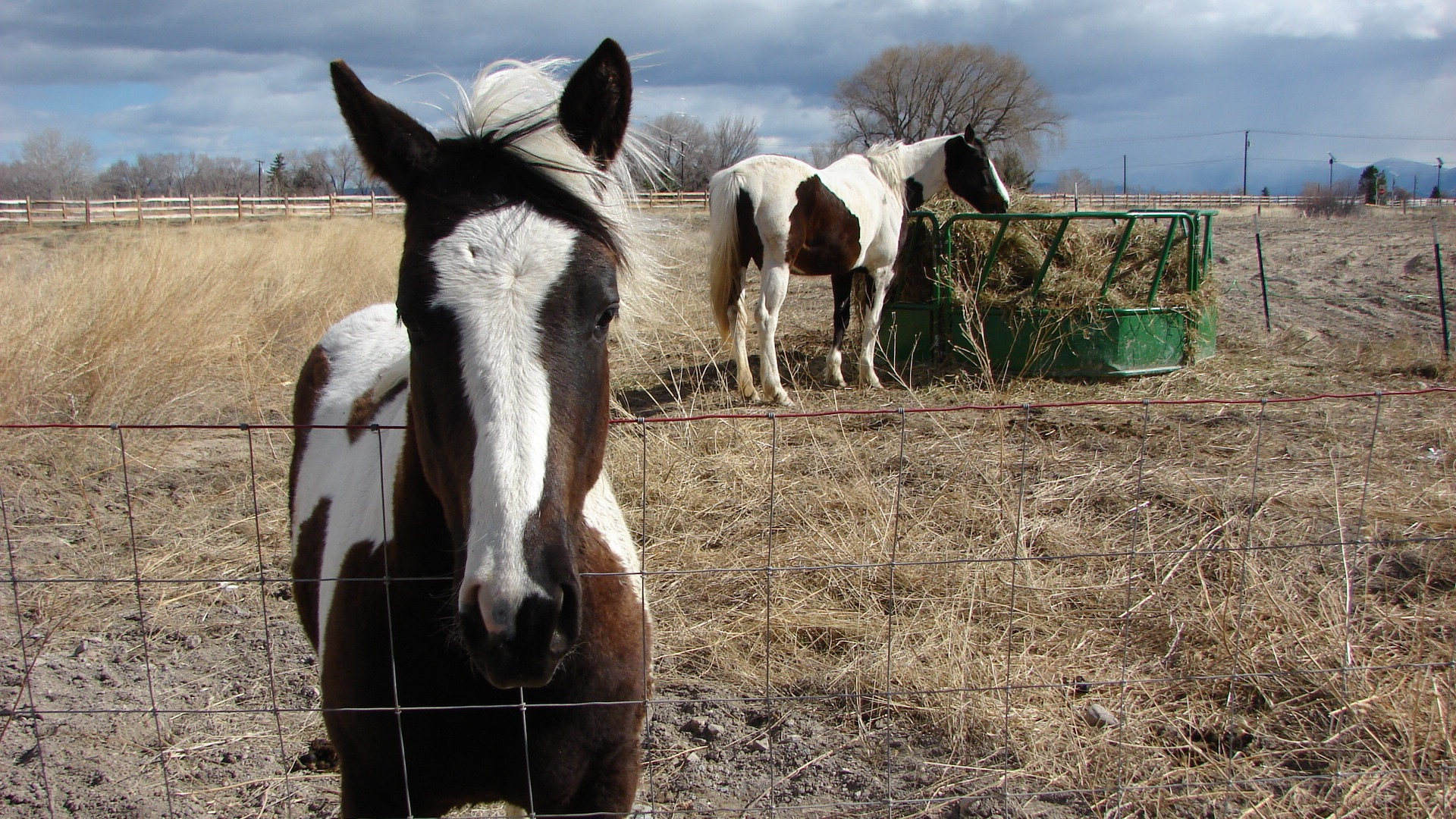 """Our neighbors have the friendliest horses in the world. They'll come up and say """"hello""""."""