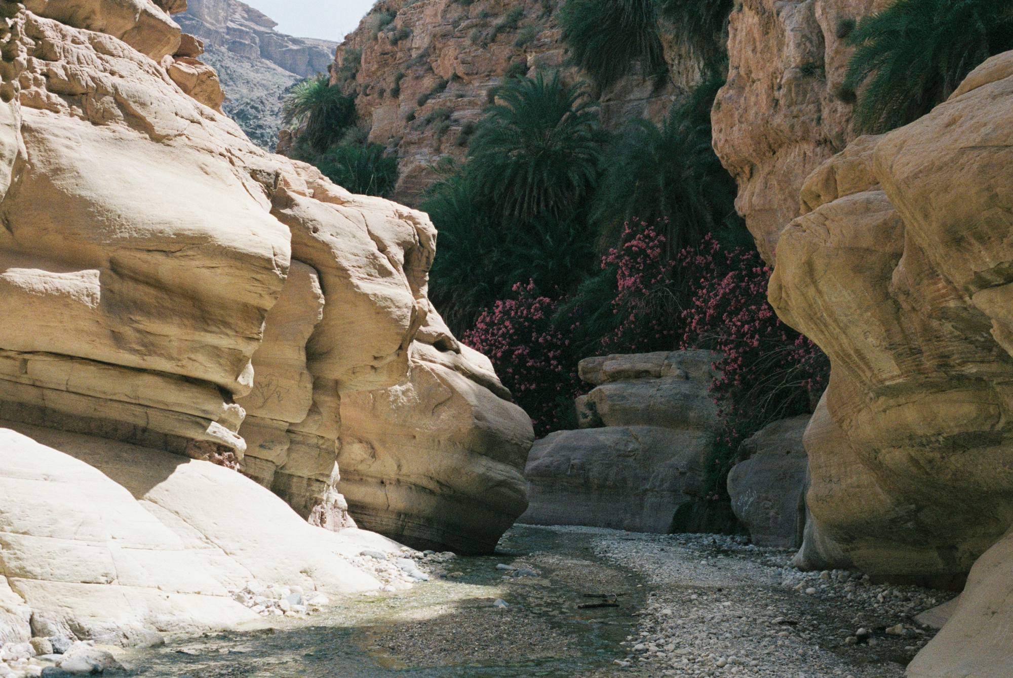A subtle burst of green and Oleander begin to show during a hike deep into Wadi Dana.